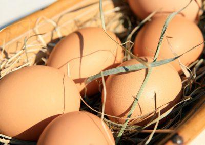 Rottaler Bio-Eier