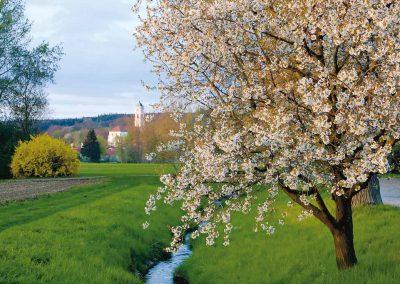 Bad Birnbach – Bachlauf im Frühling