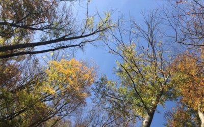 Verwurzeln und Wachsen wie ein Baum